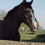 My Old Horse